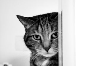 curiosity cat sport education